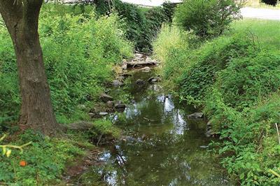 Trávnaté bažiny a retenčné rybníky