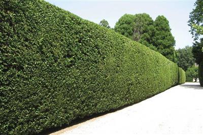 Zelené protihlukové steny