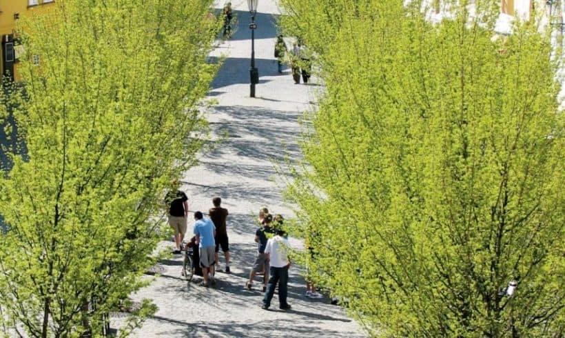 Ulice a stromy lemované pruhy