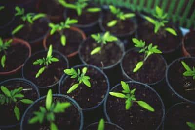Hydroponická zelená fasáda