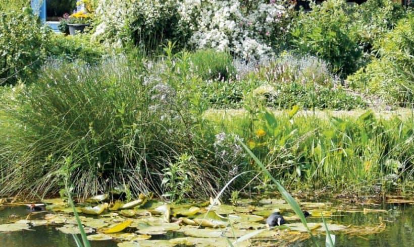 Dažďové rybníky na tlmenie a čistenie mierne znečistenej vody
