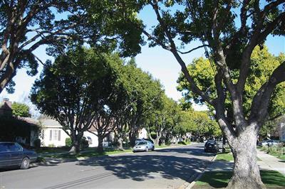 Výsadba a obnova mestských stromov