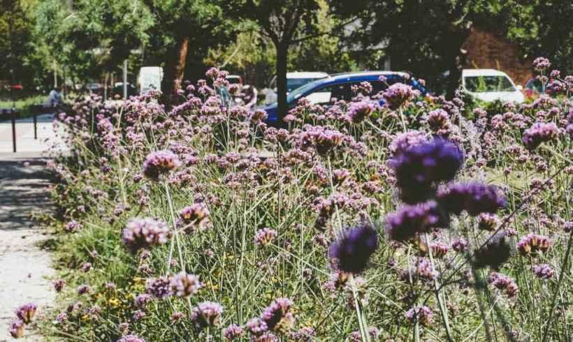 Kvetinové lúky