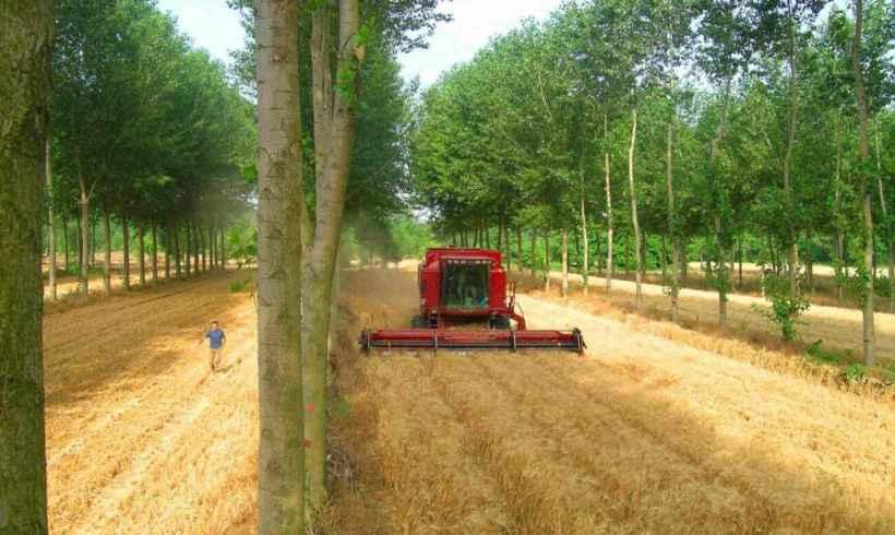 Trnava: Agrolesníctvo je budúcnosť