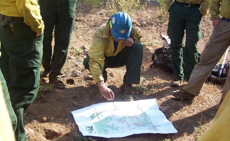 Ako plánovať  ochranu stromov a zelene pri stavebnej činnosti?