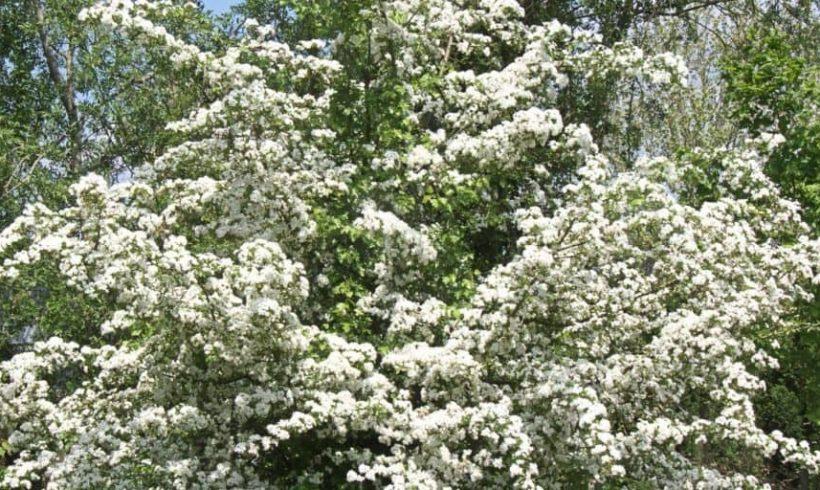Výber rastlín odolných voči suchu