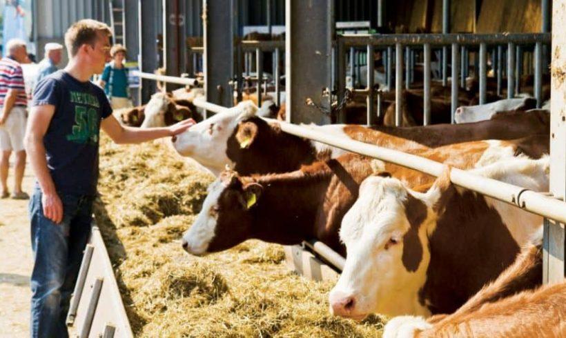 Mestské poľnohospodárstvo – obchodné iniciatívy