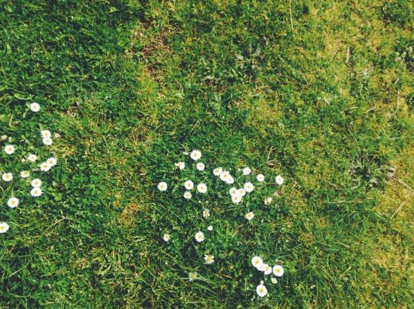 Ako dopriať kosačke, trávniku aj sebe odpočinok?