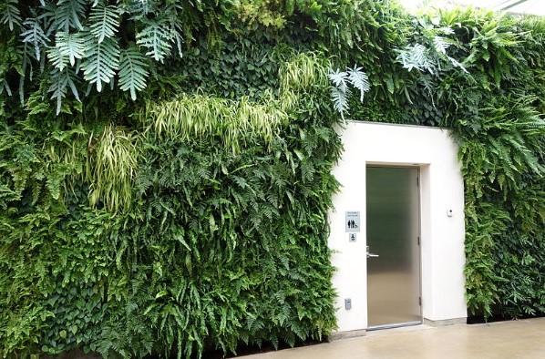 Ako vytvoriť zelenú stenu či vertikálnu záhradu?