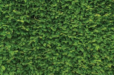 Zelené ploty