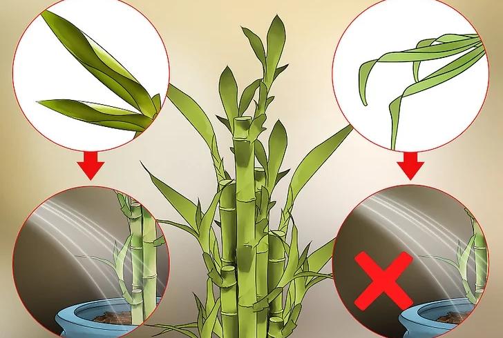 Ako pestovať bambus v interiéri?