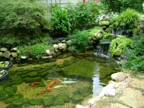 Ako si vytvoriť malé jazierko na záhrade?