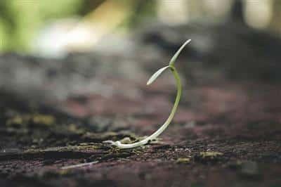 Inteligentná pôda ako substrát