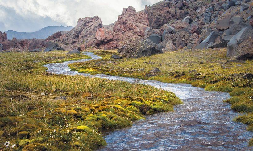 Re-naturalizácia brehov vodných plôch