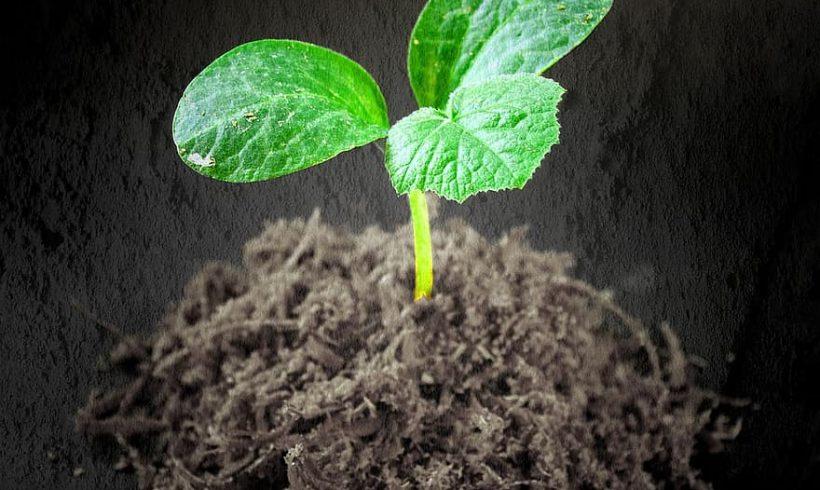 Ako zasadiť  semienko rastliny alebo stromu?