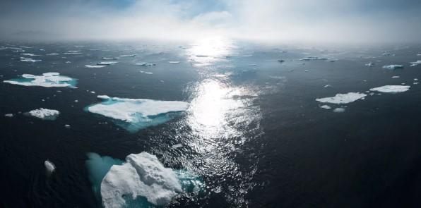 Ako prispôsobiť vyučovanie biológie riešeniam klimatickej zmeny?