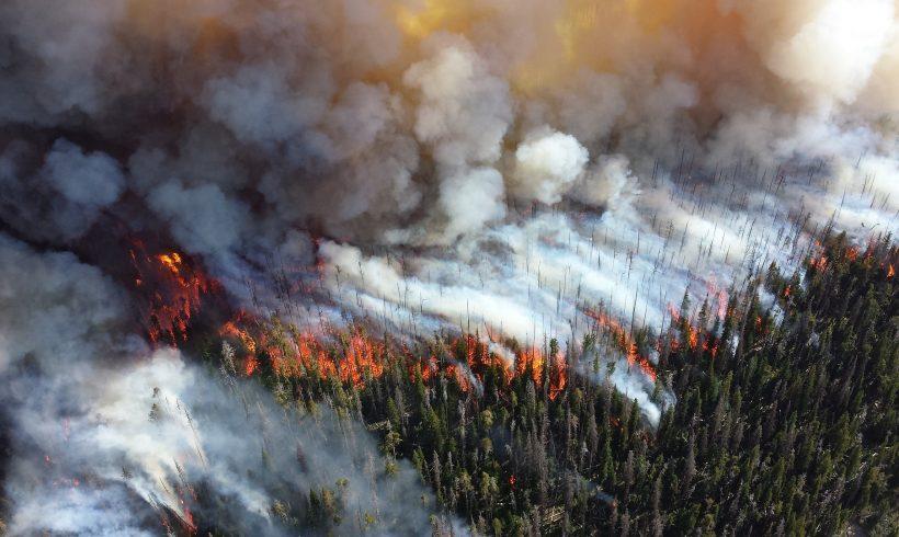 Ako sa pripraviť a postupovať pri lesných požiaroch?